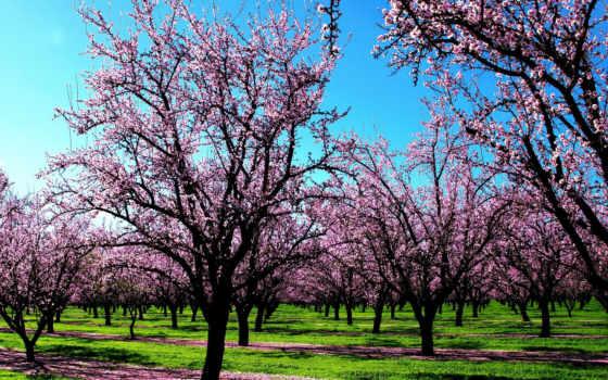 года, времена, весна
