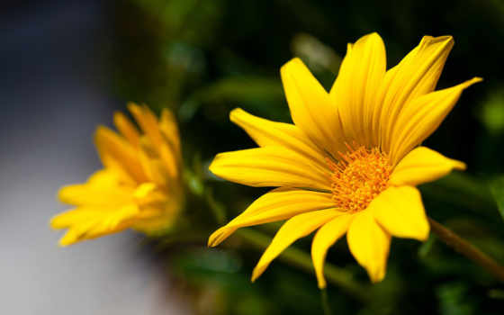 free, цветы