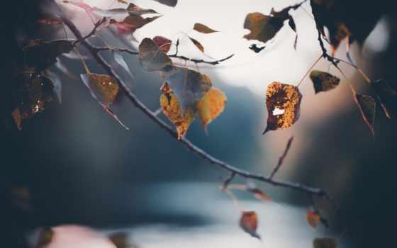 нояб, листва, ветер, дерево, oblaka, пожелтевшие, закат, antique,