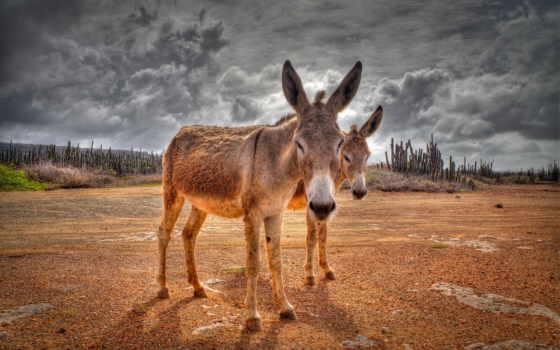 donkey, animal, you