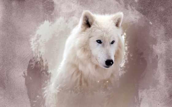 волк, zhivotnye,