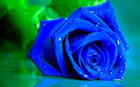 роза, blue, зелёный, live, roses, фон, wet, бутон, розы,