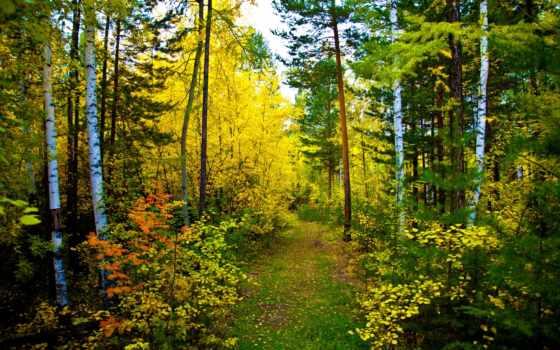 лес, осень, природа, trail, лесу,