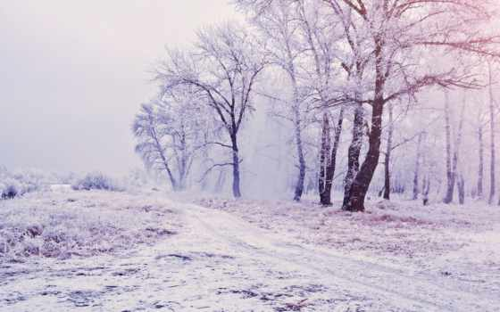 деревя, снег, zima