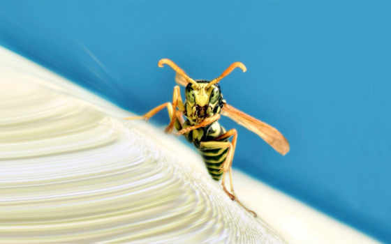 дек, wasps, макро, fps,