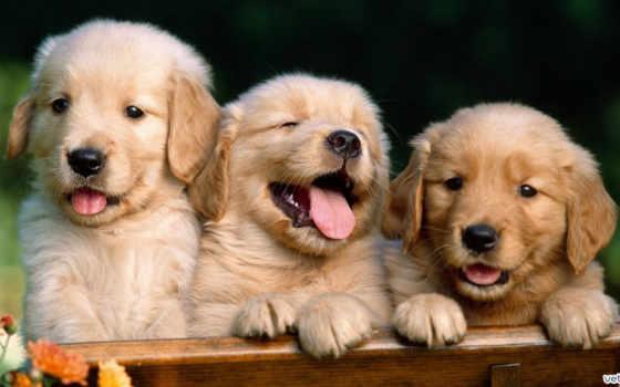 que, amigos, dar, por, para, amigo, animais, gracias, los,