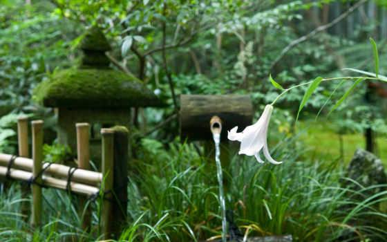 japanese, trees, garden, цветы, забор, lily, весна, природа,