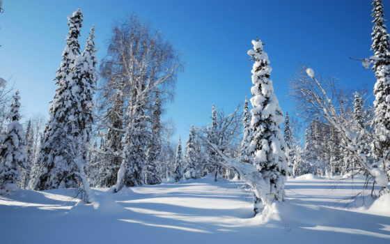 утро, winter, trees, лес, ecran, снег, небо, hiver,