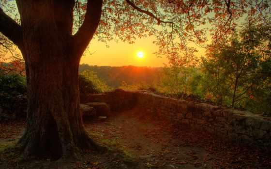 закат, лес, осень, природа, pictures, категория, served, are, possible,
