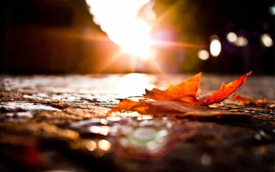 осень, макро, дорога, лист, весь, экран,