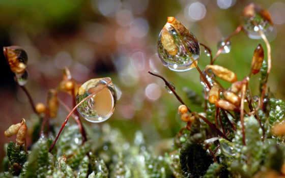 макро, солнца, роса, house, трава, cvety, красивые, капли, широкоформатные, бесплатные, экран,