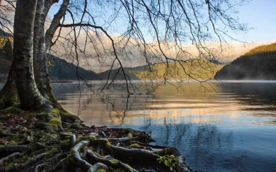 root, loch, озеро, гора, сорт, popularity, trees, дерево