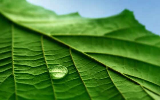 макро, листья Фон № 23914 разрешение 1920x1200