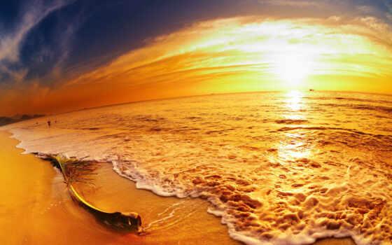 море, ветка