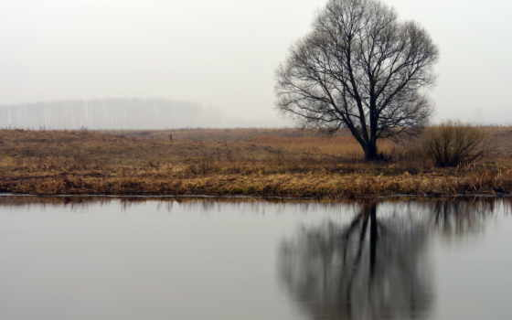 река, trees, природа, doğa, natur,