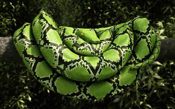 snake, зелёная, reptile