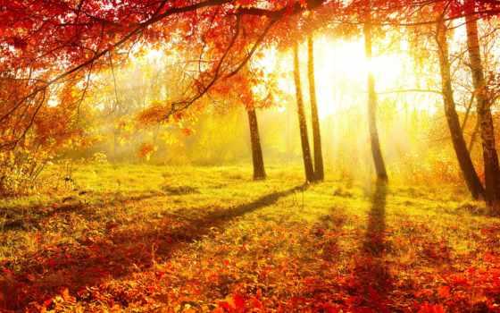 осень, природа, листва Фон № 95785 разрешение 4600x3260