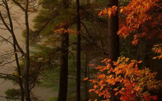 картинка, природа, леса