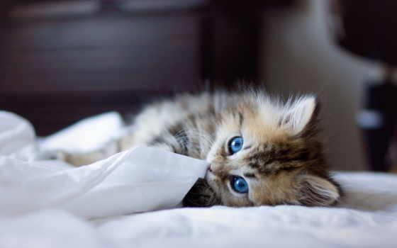 котенок, кошка, glaza