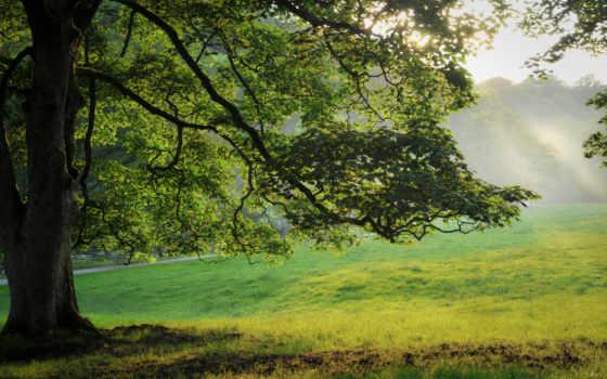 трава, природа, дерево
