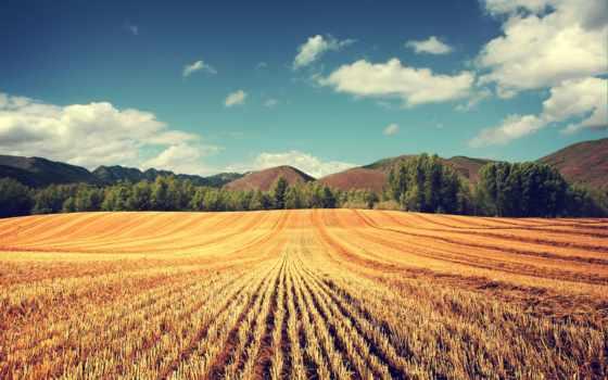 урожай, земли, продажу