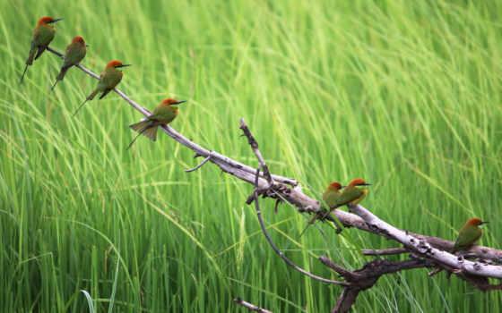 parede, papel, aves, verde, árvore, pássaros, natureza, animais,