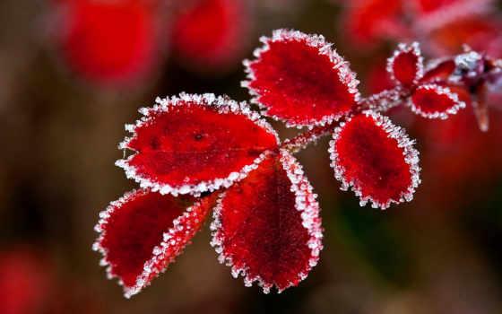 снег, осень, initial, макро, очень, коллекция, лучшая, листва,