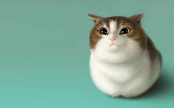 anime, коты, soularttt, zhivotnye, питомник, кот, настроение, art, рисунок,
