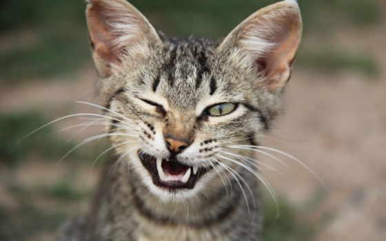 кот, коты, веселые, похожие, cats, wink, знаменитостей, like, смотреть,