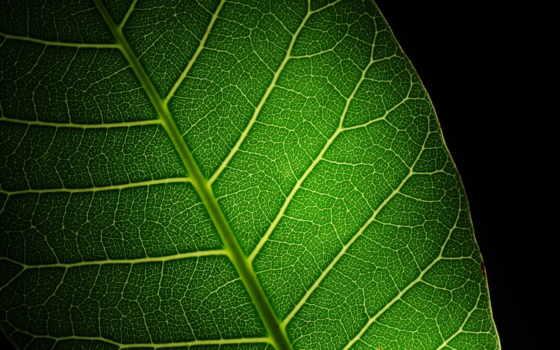 free, leaf, stock, photos, royalty, images, листья, макро, клеточка,