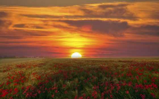 red, поле, маки, небо, цветы,