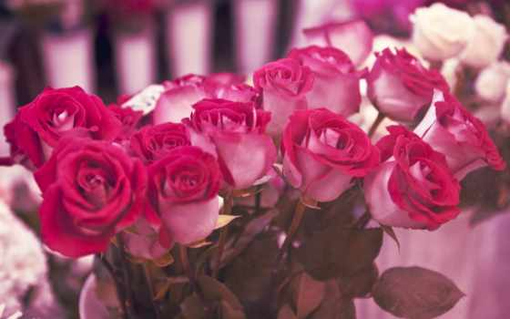 birth, день, postcard, cvety, картинка, роза, телефон, днем, поздравить