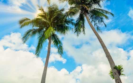 palm, summer, пляж, море, небо, качество, seascape, blue, остров, большой, tropical