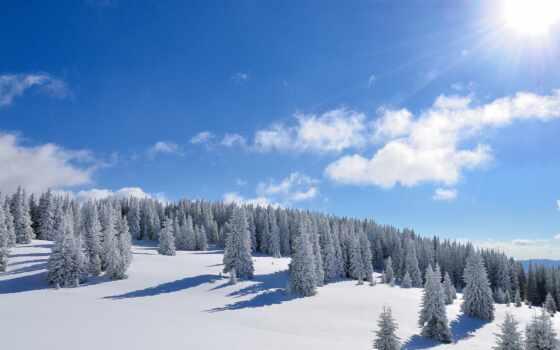 winter, природа, снег, sun, лес, trees