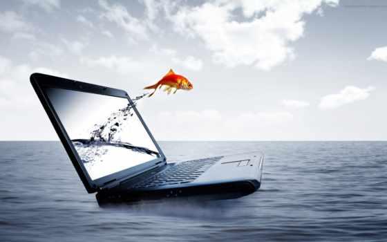 ماهی, ноутбук