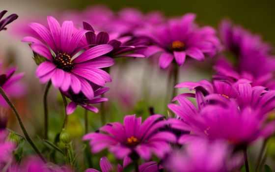 цветы, яркие, красивые