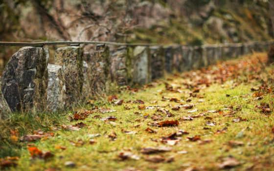 листья, грусть, осень