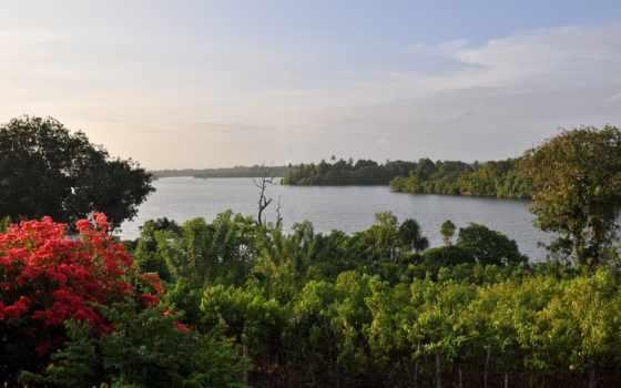 река, hikkaduwa, sri, lanka, top, flowers,