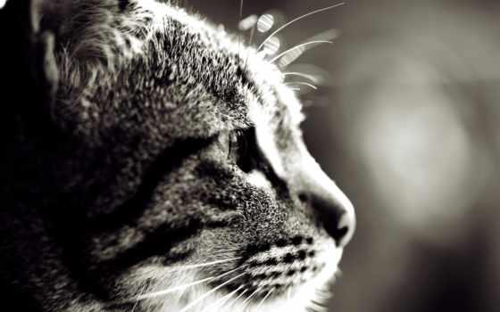 свет, нос, pet, кот, морда, кошачья, лапки, ус, добавить, лапы,