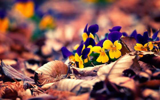 листва, cvety, листья, flowers, surfer, кит, качестве, осень, хорошем,