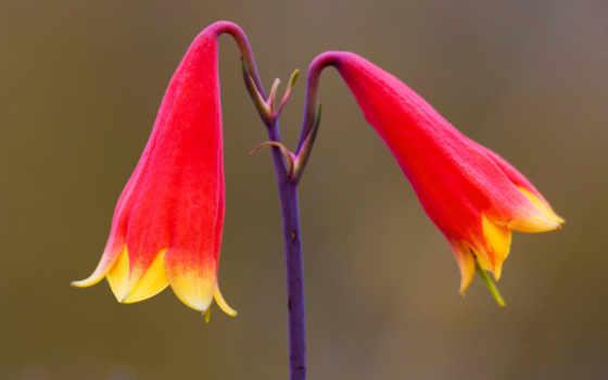 cvety, сердце, картинка, добавлена, коллекцию, сайта, оценок, основе,