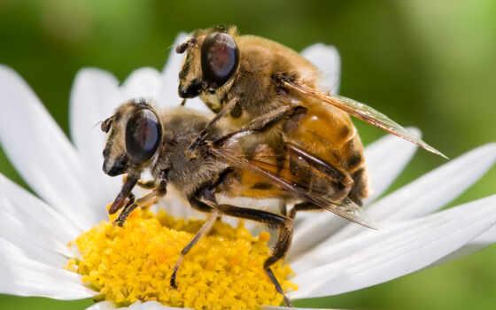 пчелка, мужской, когда, robloks, мед, climax, муви, testicle, explode, meme