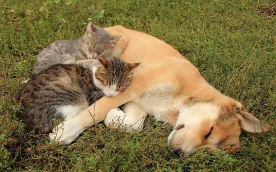 животные, кошки, коты Фон № 64474 разрешение 1920x1200