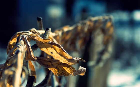 листья, осень, сухие