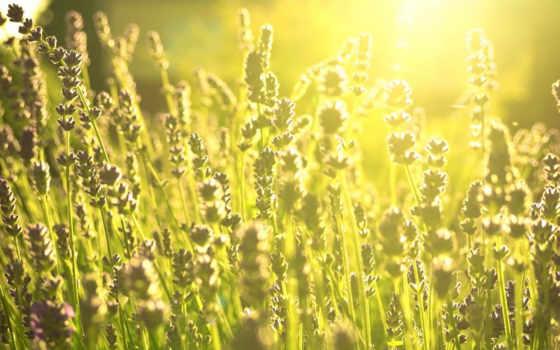 daylight, зелёный, поля