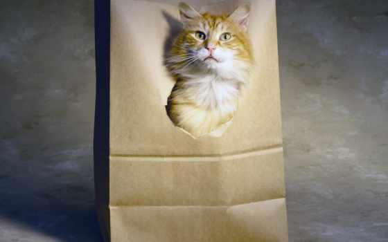 кот, red, вконтакте, аватар, глазами, пакете, голубыми, аватары, stepup,