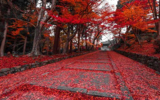 kyoto, japanese, осень, тропы, аллеи, прогулку, волшебные, приглашающие, магические, июл, park,