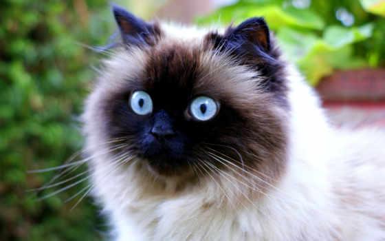 zhivotnye, свет, кошки, android, живые, кот, страница,