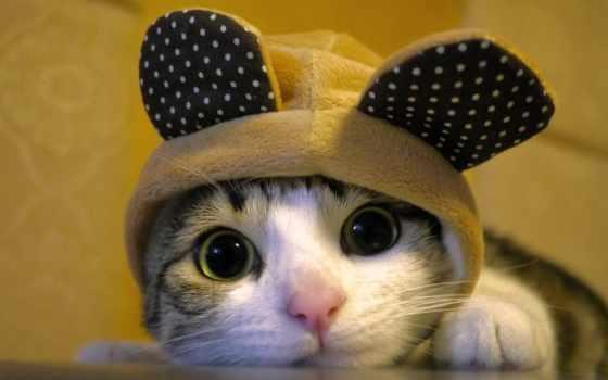 кот, вконтакте, gifs, коты, cute, реальные, каталог, club, youtube, год,