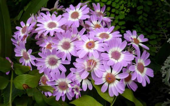 iphone, cvety, цветы, purple, flowers, квадро, mobile, предметы, cup,